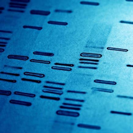 What is DNA analysis? - DNA Testing Choice