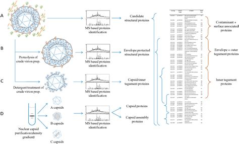 Viruses | Free Full-Text | Structural Proteomics of
