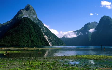 Milford Sound, New Zealand: Traces of The Sea in The Green