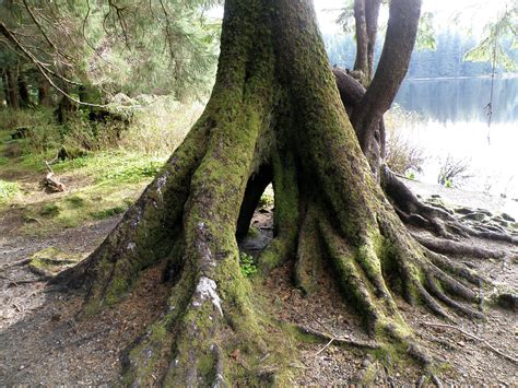 Tree Root Wallpapers High Quality | Download Free