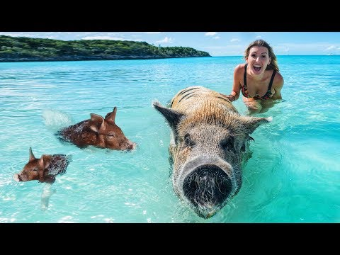 Animal Islands: Seven Islands Ruled by Creatures Great and